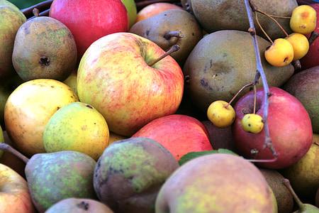 사과, 과일, 과일, 건강 한, 비타민, pomology, 사과 품종