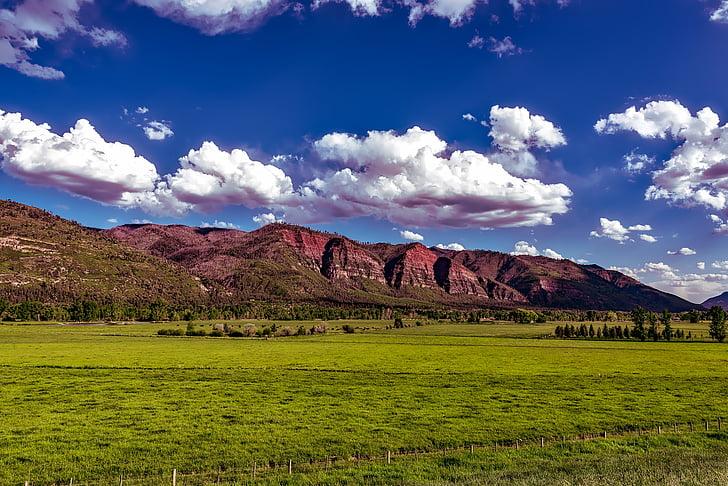 Colorado, muntanyes, Vall, Prat, pastoral, bestiar, granja