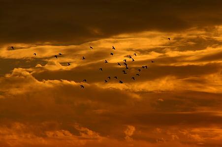 sunset, sky, cloud, birds, red