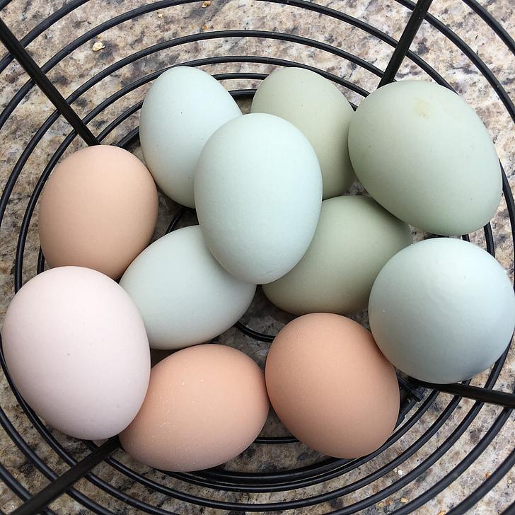 quả trứng, Trang trại, tươi