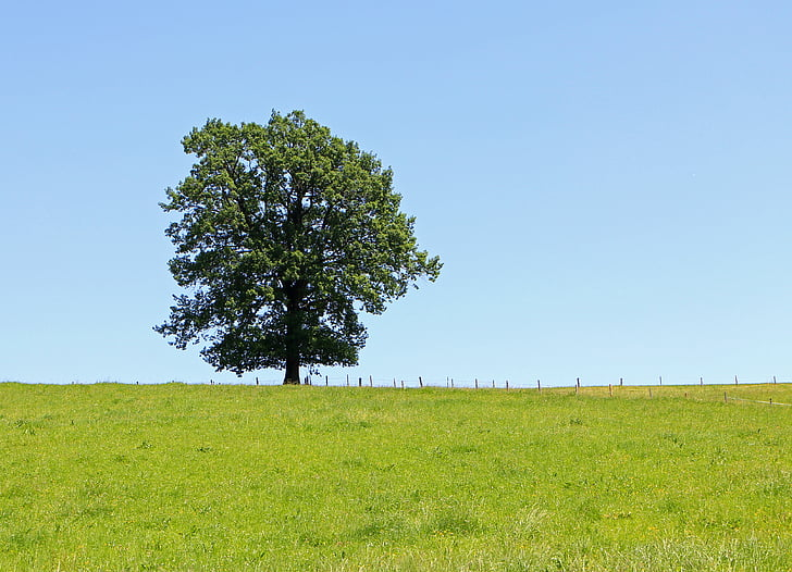 tree, individually, meadow, pasture, blue, sky, green