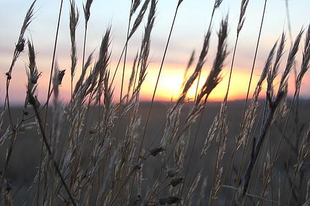 zachód słońca, pszenicy, kolce, światło, Spokojnie, wolnym powietrzu, zimowe