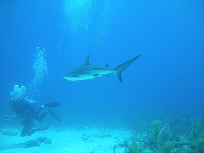 Daivings, nirt, Nassau, Bahamu salas, zemūdens, okeānu dzelmēs, jūra