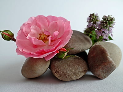 stones, stack, balance, meditation, patience, relaxation, rose