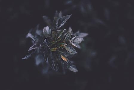 flower, nature, leaves, violet, dark, bokeh, winter