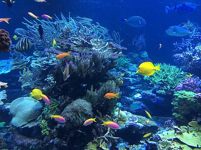 sota l'aigua, peix, tropical, oceà, natura, escull, Coral