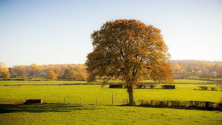 fa, természet, ősz, rét, táj, napos, idill