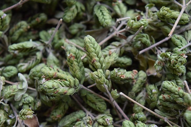 Origano, začin, bilje, biljka, sušene, pozadina, miris