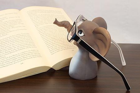 elefant, ulleres, llibre, llegir, ulleres de lectura, llibre ulleres, animal amb ulleres