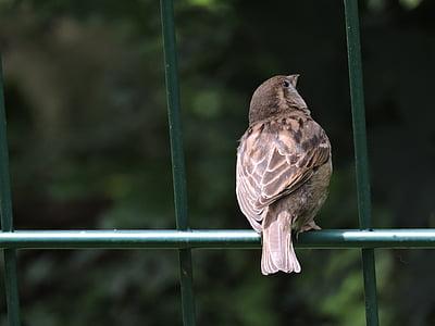 bird, zoo, feather, birds, animal, wild bird, creature