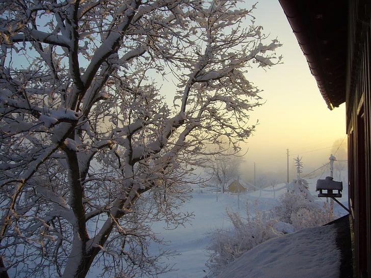 neu, explosió d'hivern, paisatge, morgenstimmung