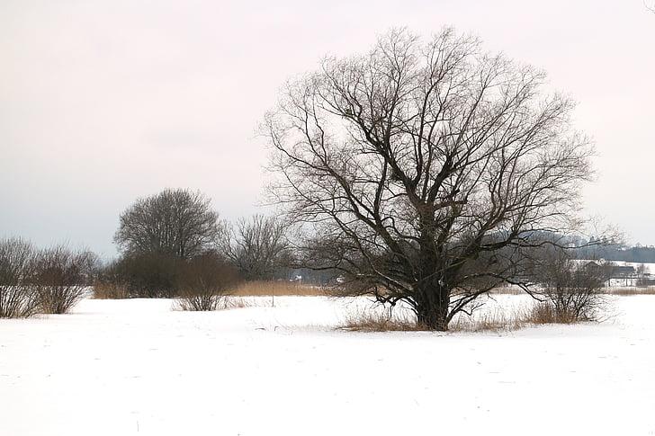 winter, snow, tree, individually, wintry, silhouette, kahl