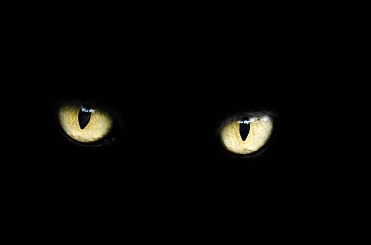 oči, mačka, Halloween, čierna, veľa šťastia, zlý, tmavé