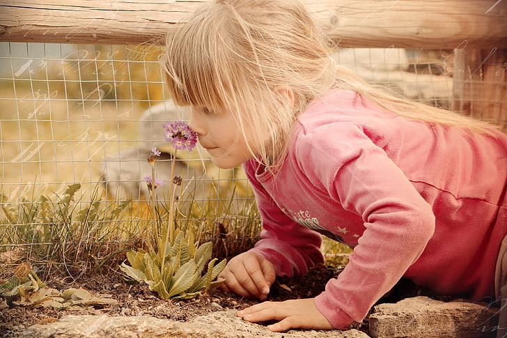 child, girl, flower, fragrance, smell, retro look, old photo