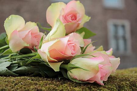 Roses, nobles roses, flors, Rosa, Roses roses, Rosa roden preciosos, flor rosa