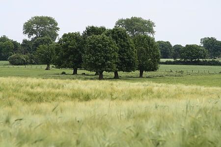 field, tree, landscape, nature, arable, fields, autumn