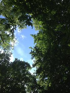 clar de bosc, bosc, Tendal, arbre, natura, verd, dalt dels arbres