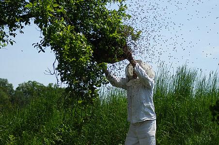 rusc, abelles, abelles de mel, l'apicultura, insecte, rusc, mel