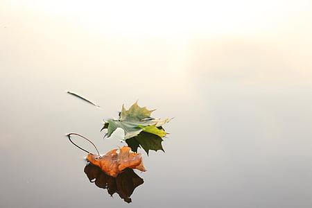 δύο, φύλλα, καφέ, επιφάνεια, το φθινόπωρο, φύλλα σφενδάμου, Σφενδάμι, φύλλα