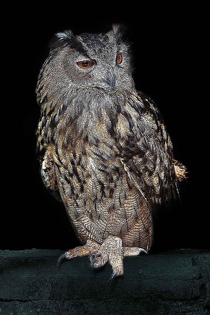 owl, bird, night, animal, feathers, wildlife, nature