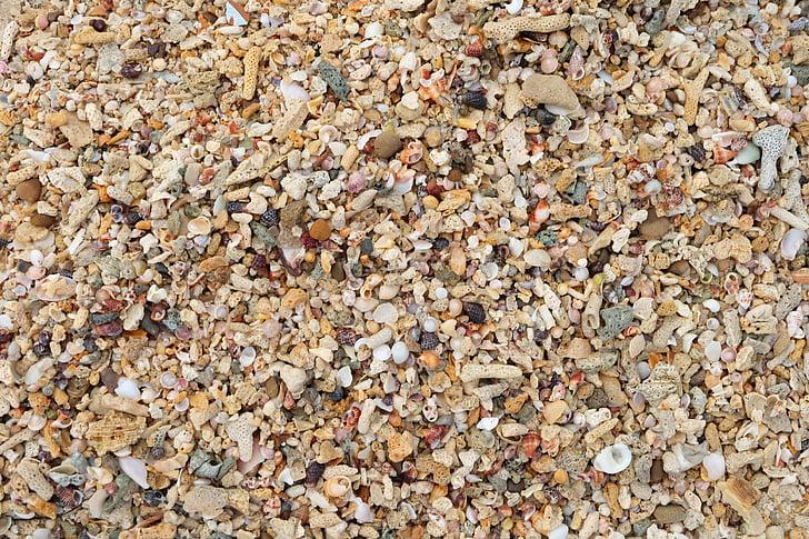ljuska, more, morske školjke, morske školjke, marinac, Morska školjka, plaža