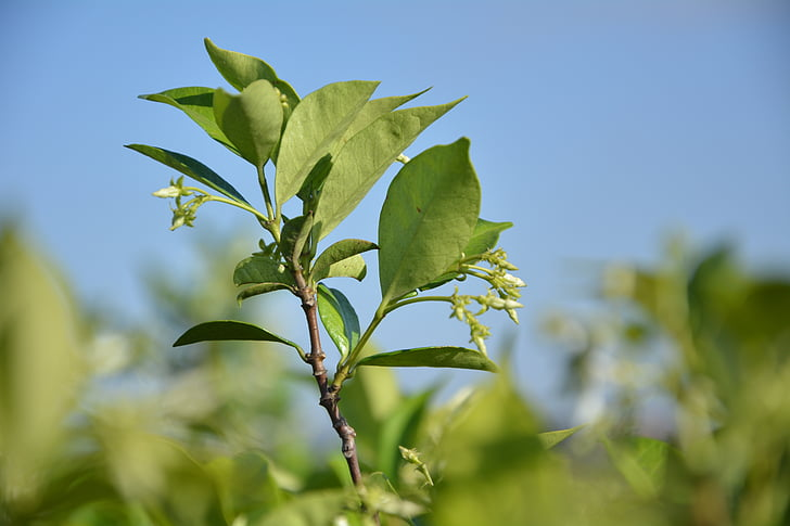 new growth, spring, sprout, gardening, nature, leaf, plant
