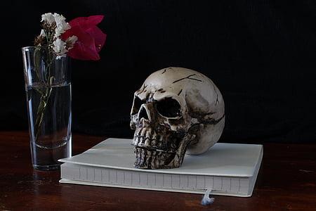 skull, still life, representation, death, ephemeral, composition, vanities