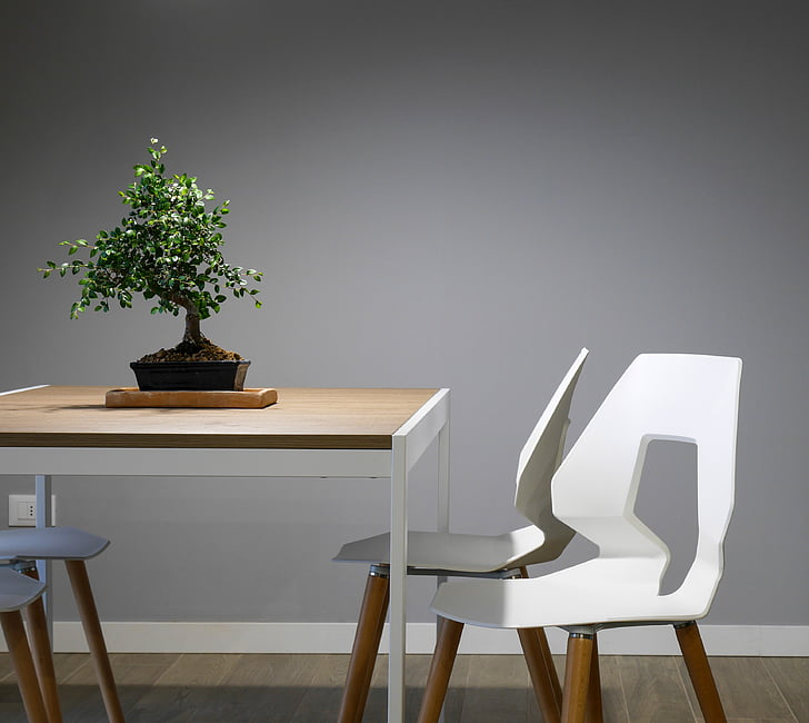 interior, design, table, chairs, furniture, green, plant