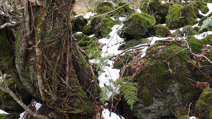 moss, winter, rock, nature, forest, outdoors