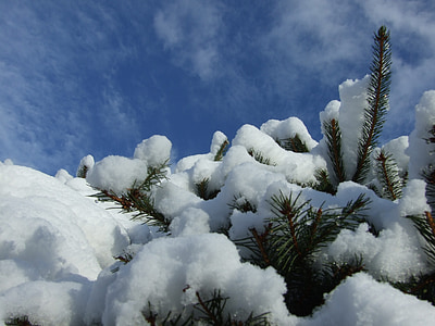 l'hivern, jardí, neu