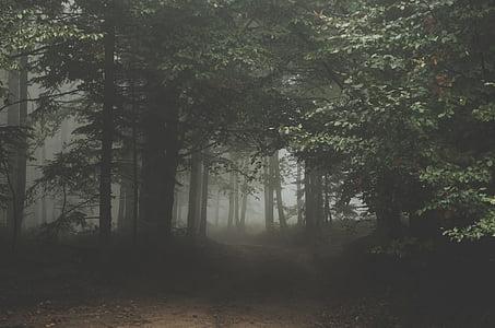 ліс, Темний, Вудс, стежка, шлях, шлях, Мряка