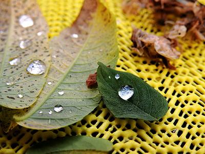listy, Rosy, kvapky vody, Drip, jeseň, dewdrop, rastlín