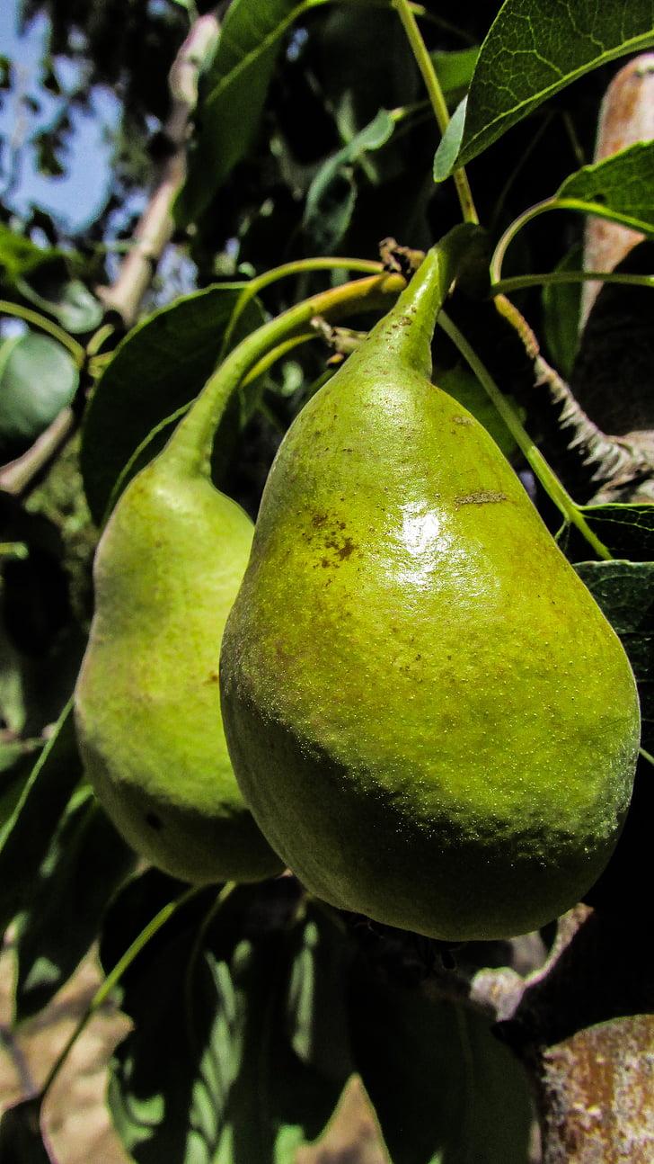 pera, fruita, arbre, jardí, aliments, fresc, Sa