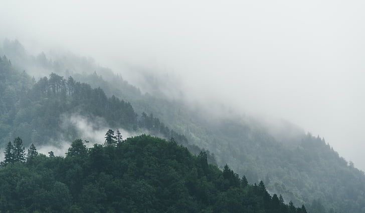 fog, forest, nature, trees