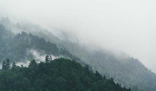 nebbia, foresta, natura, alberi