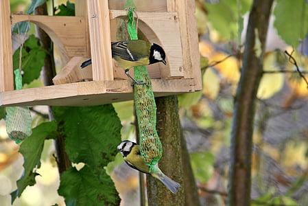 две птици, птици, птица, малка птичка, Черно и бяло, синигер, син синигер