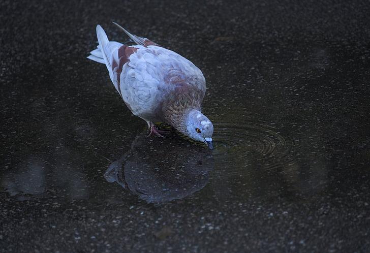 птица, природата, птици, Живата природа, пернат състезание, пера, клюн