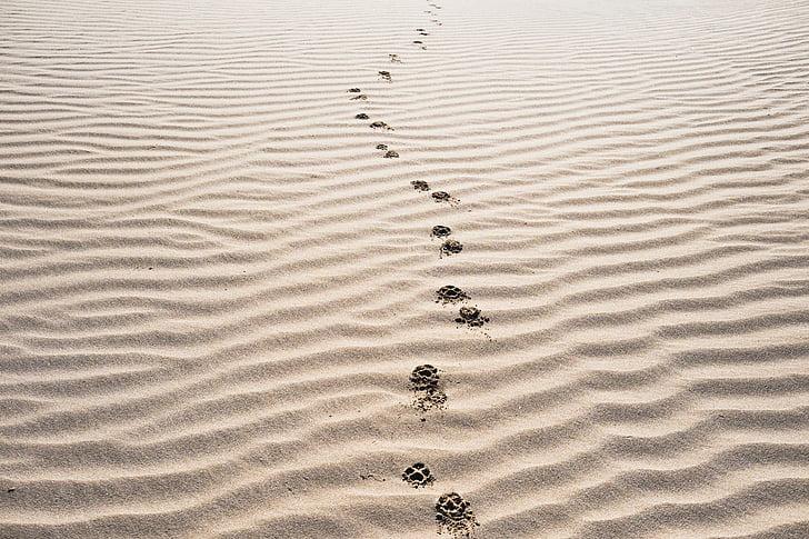 Sand, jalanjäljet, Beach, Desert, maisema, Luonto, hiekkadyynejä