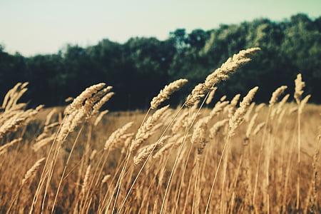 summerfield, grass, field, summer, dry, rural, nature