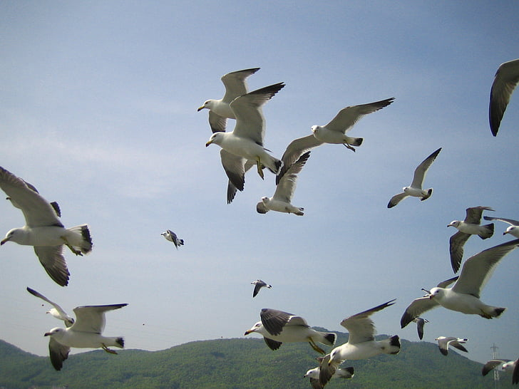 jūra, kaija, jauns, avārijas dienestu izsaukšanas, spārnu, debesis, lido