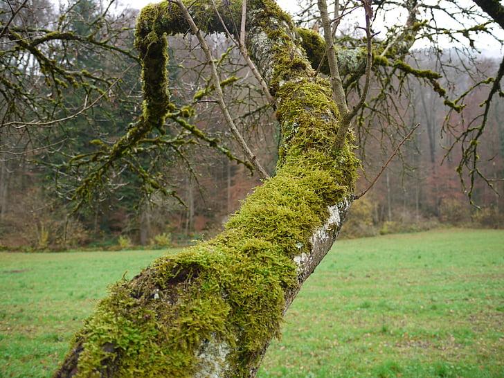 molsa, arbre, bosc, paisatge