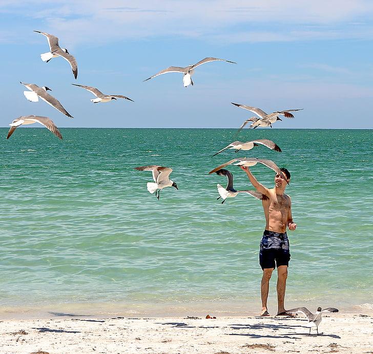 beach, caribbean, seagulls, young, summer, sea, landscape