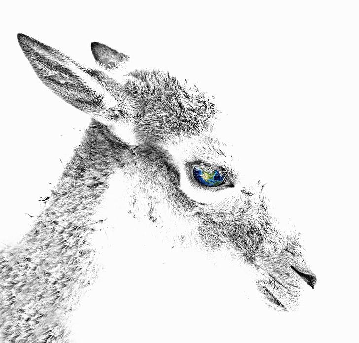 ROE deer, dzīvnieku, acs, sastāvs, digitālā māksla, Staltbriedis