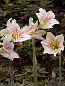 bunga, alam, alam, hijau, mekar, Bud, botani