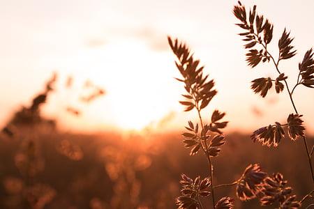 cereals, Alba, paisatge, camp, morgenstimmung, l'agricultura, estat d'ànim
