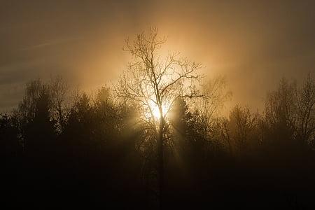 posta de sol, arbres, boira, silueta, sol, natura, nit