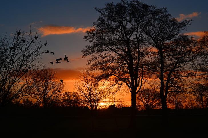 salida del sol, morgenrot, cielos, pájaro, atmosférica, naranja