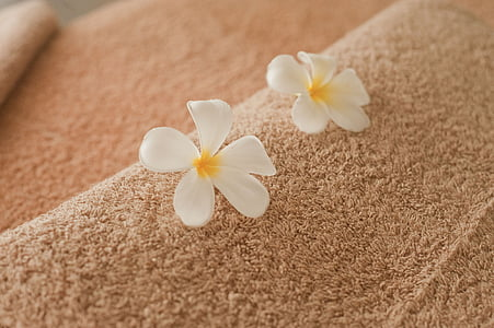 spa, message, massages, relaxation, spa Treatment, towel, health Spa