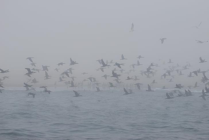 Horisont, fåglar, havet, naturen, Seagull, Namibia, Whale bay