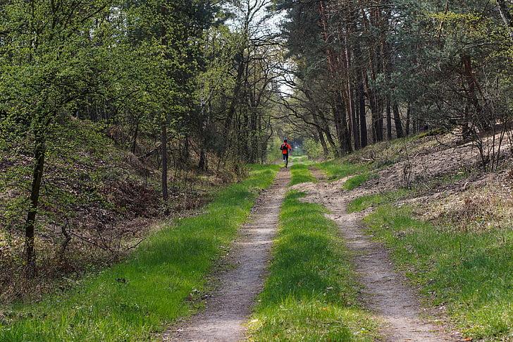lasu, sposób, drogi leśne, biegacz, uruchomiona, ścieżka, drzewo